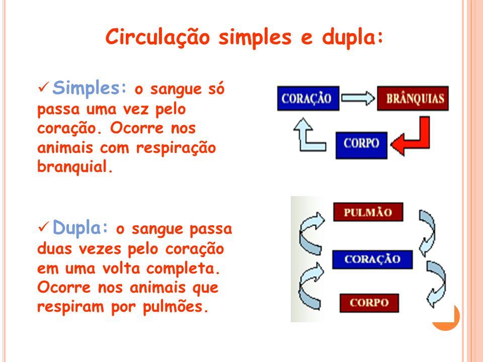 Circulação simples e dupla: