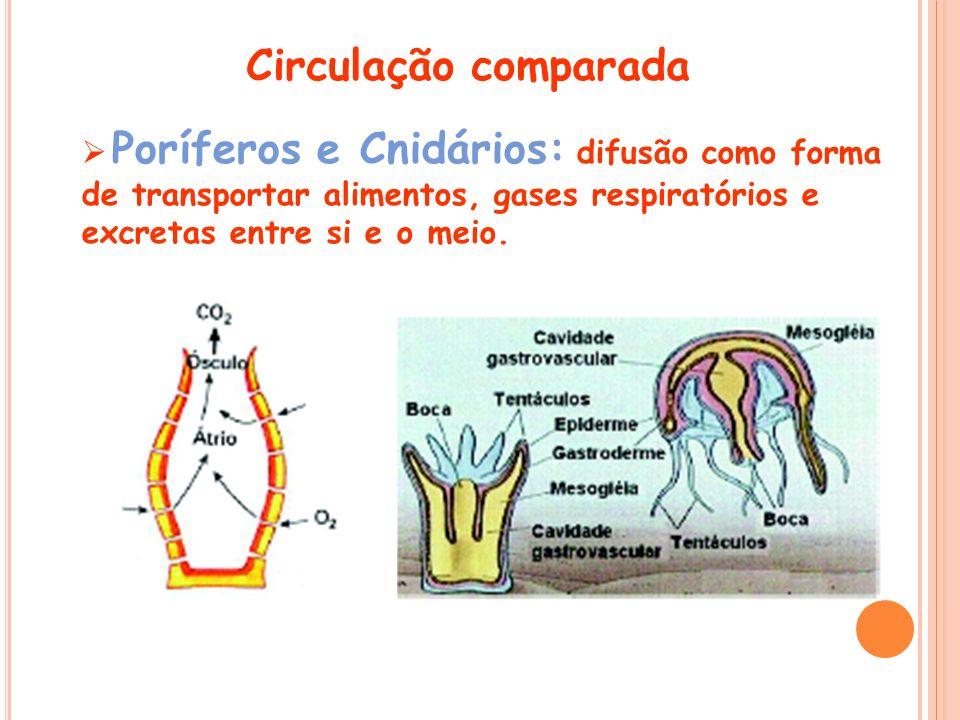 Circulação comparada Poríferos e Cnidários: difusão como forma de transportar alimentos, gases respiratórios e excretas entre si e o meio.