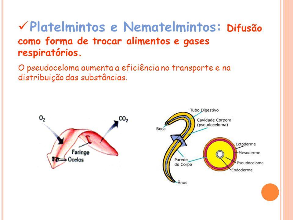 Platelmintos e Nematelmintos: Difusão como forma de trocar alimentos e gases respiratórios.