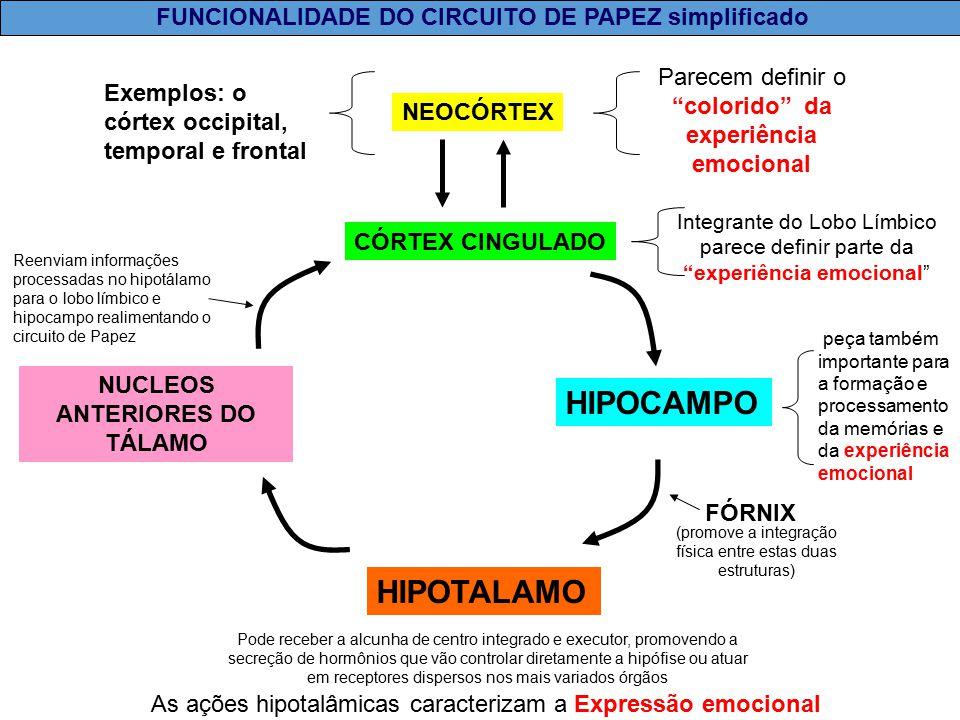 Circuito De Papez : Aspectos fisiológicos da emoção ppt video online carregar