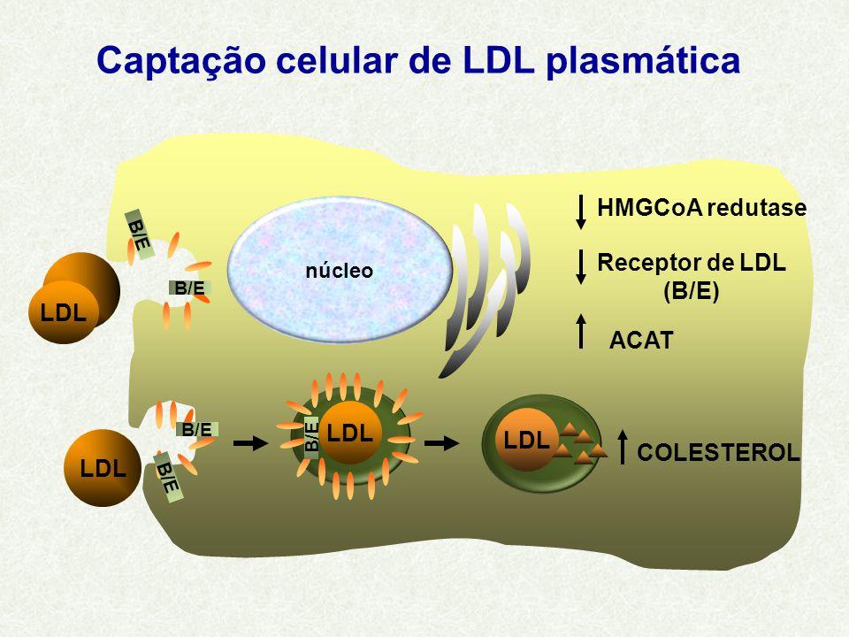 Captação celular de LDL plasmática