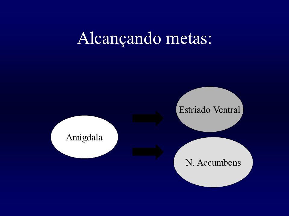 Alcançando metas: Estriado Ventral Amigdala N. Accumbens