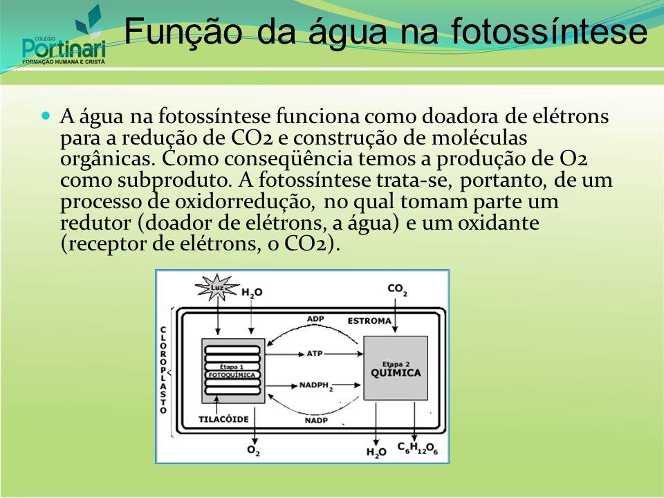 Função da água na fotossíntese