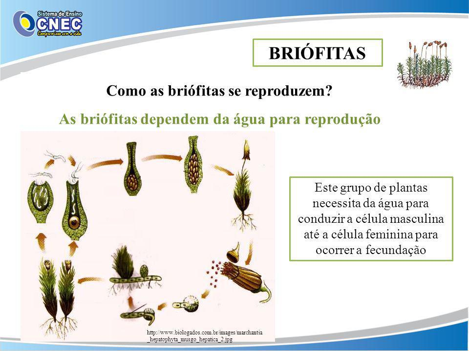 BRIÓFITAS Como as briófitas se reproduzem