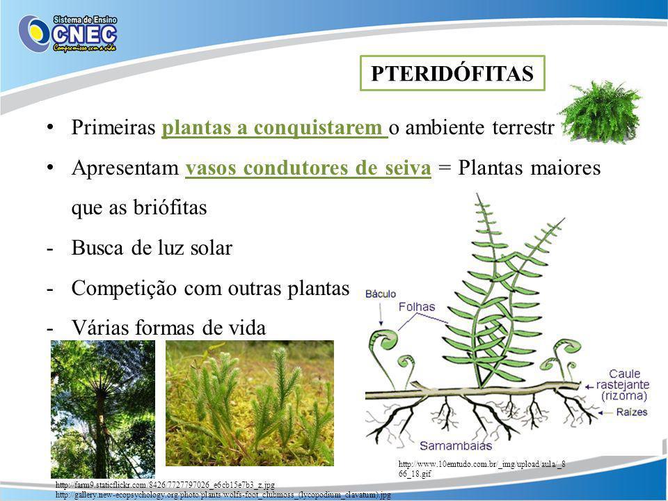 Primeiras plantas a conquistarem o ambiente terrestre