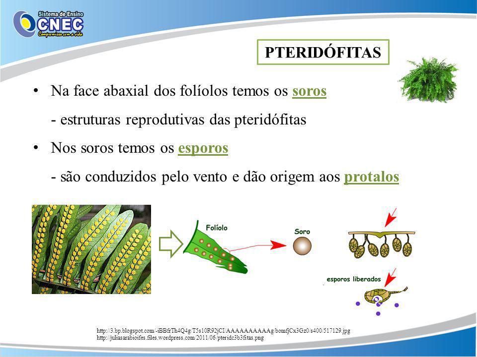 Na face abaxial dos folíolos temos os soros