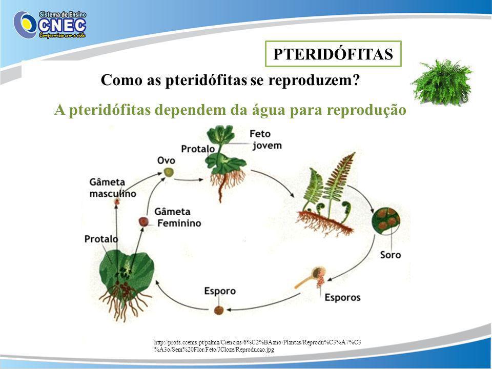 Como as pteridófitas se reproduzem
