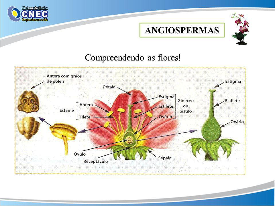 Compreendendo as flores!