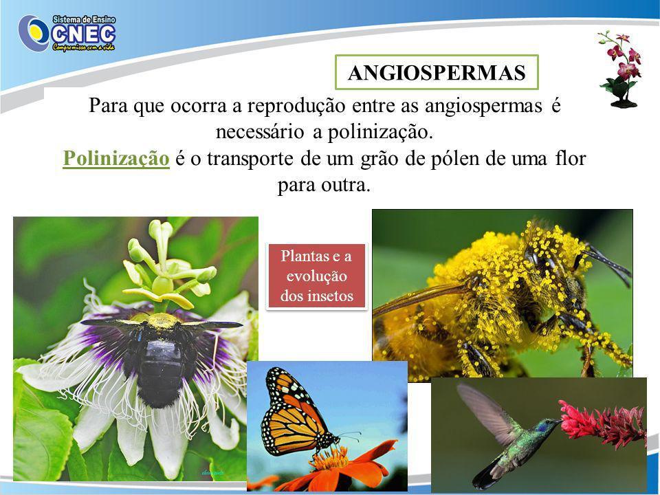 Polinização é o transporte de um grão de pólen de uma flor para outra.
