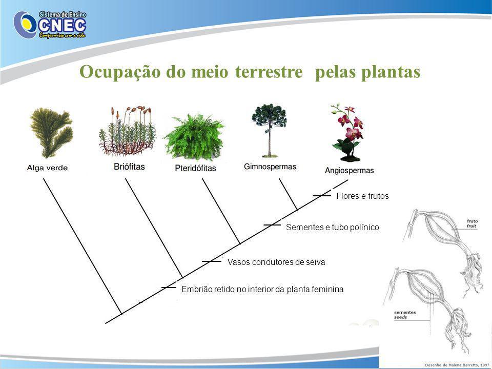Ocupação do meio terrestre pelas plantas