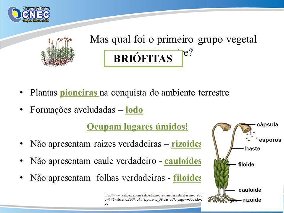 Mas qual foi o primeiro grupo vegetal terrestre