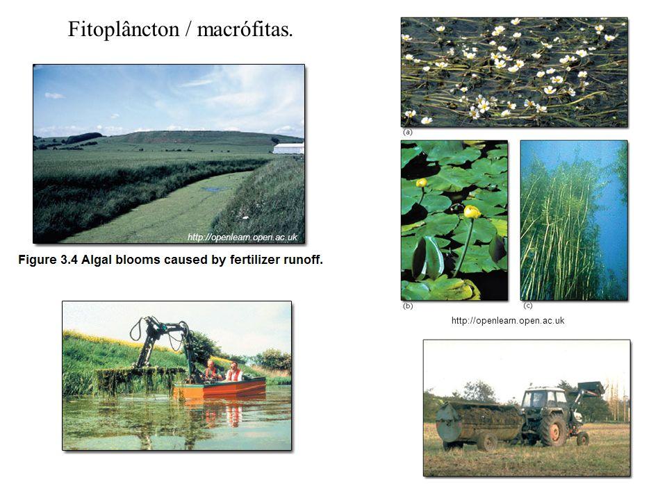 Fitoplâncton / macrófitas.