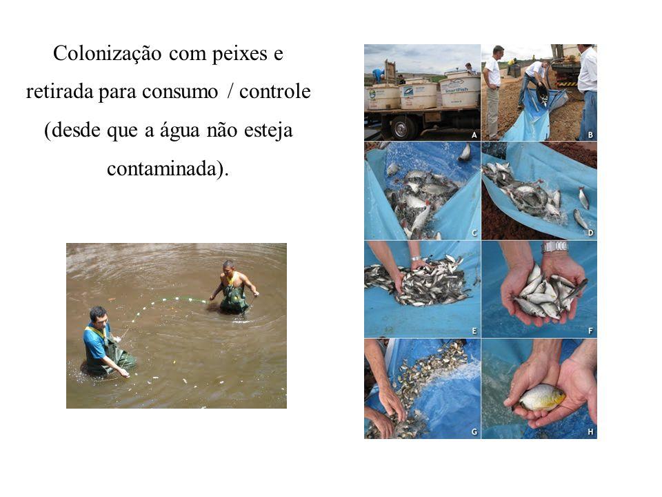 Colonização com peixes e retirada para consumo / controle (desde que a água não esteja contaminada).
