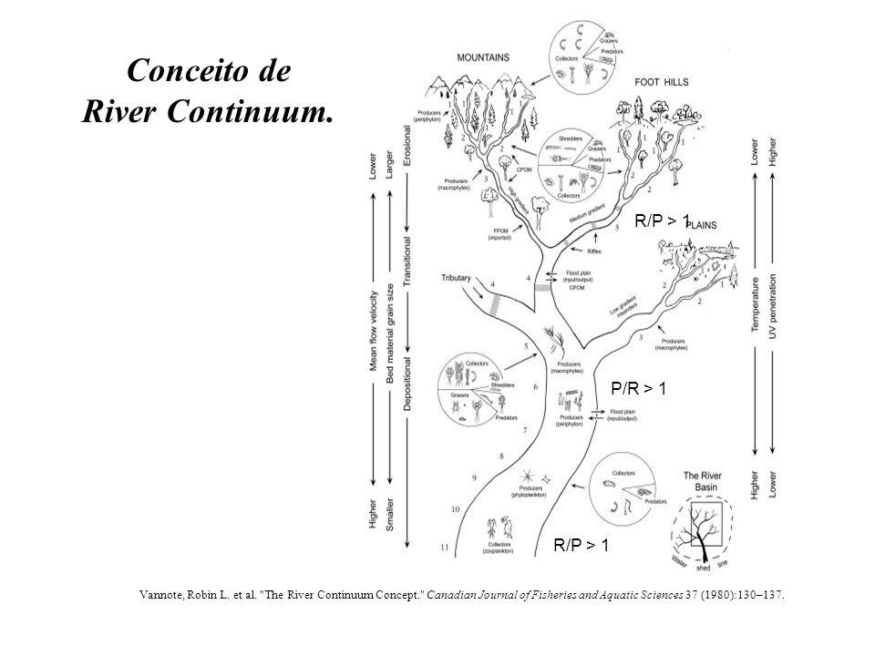 Conceito de River Continuum.