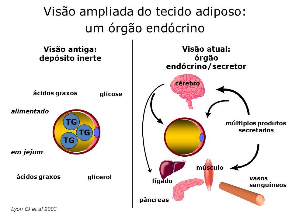 Visão ampliada do tecido adiposo: um órgão endócrino