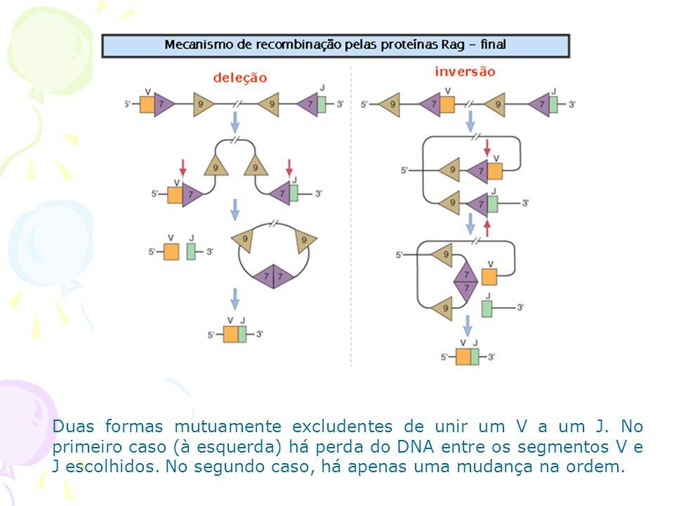 Duas formas mutuamente excludentes de unir um V a um J