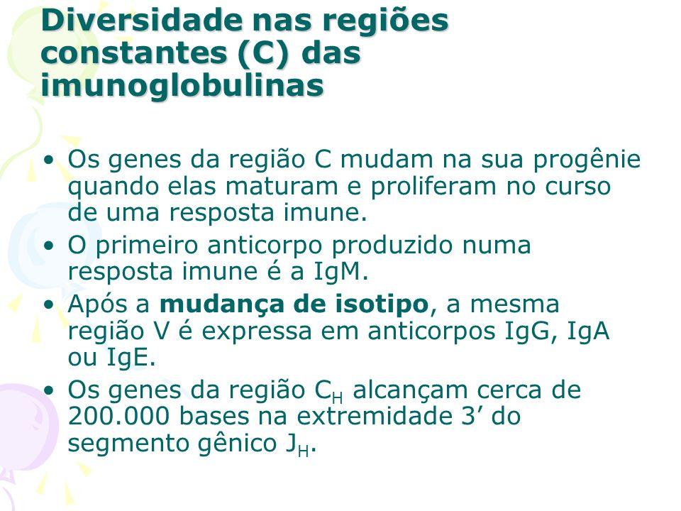 Diversidade nas regiões constantes (C) das imunoglobulinas