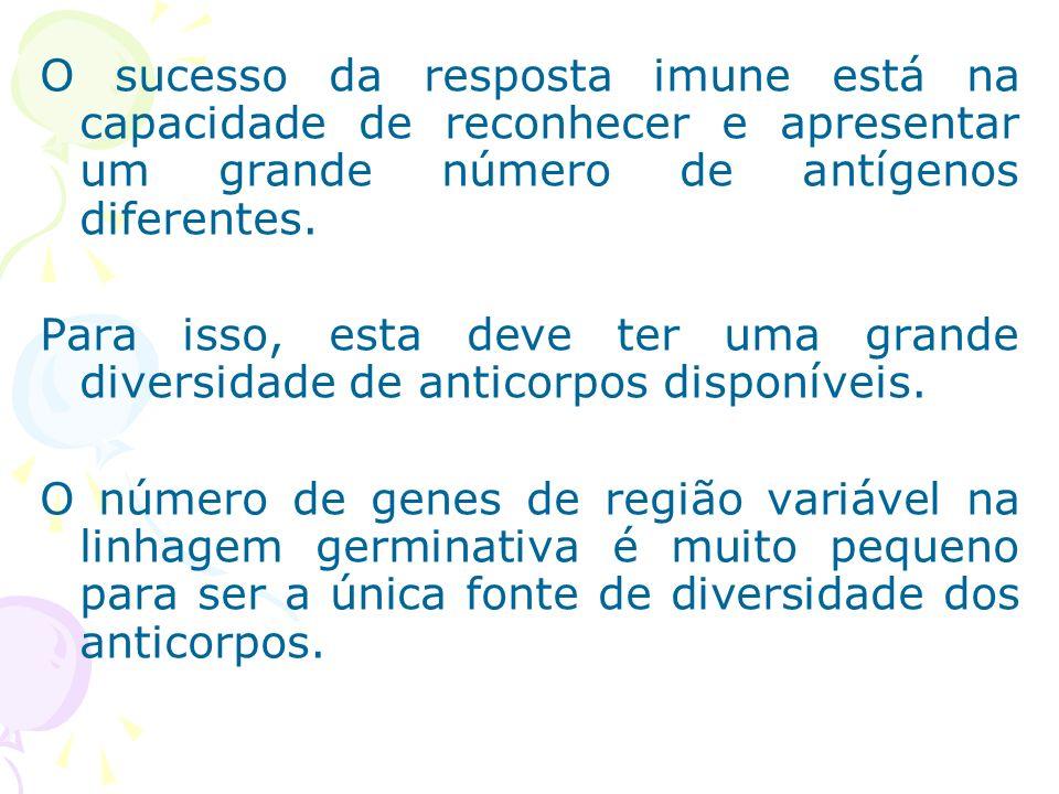 O sucesso da resposta imune está na capacidade de reconhecer e apresentar um grande número de antígenos diferentes.