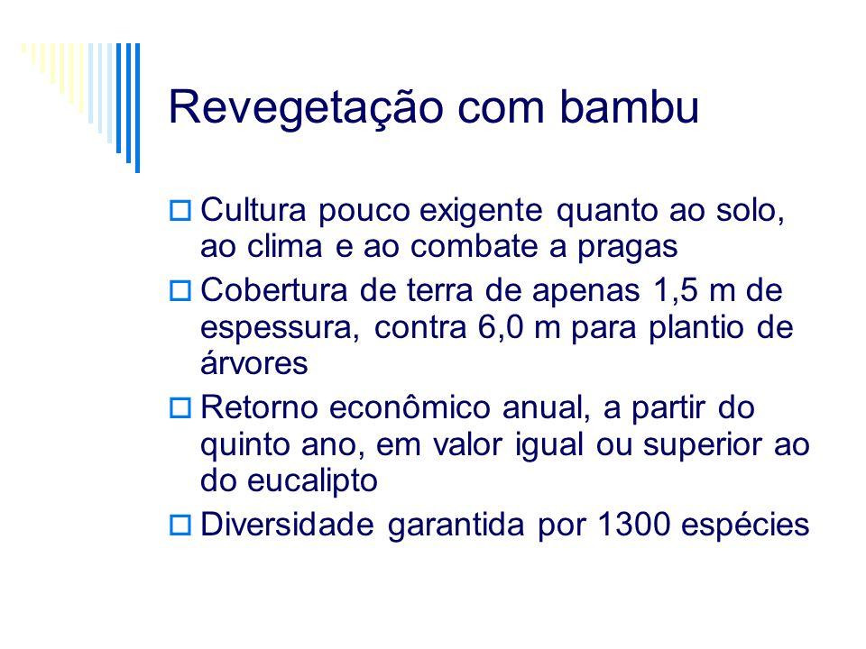 Revegetação com bambu Cultura pouco exigente quanto ao solo, ao clima e ao combate a pragas.