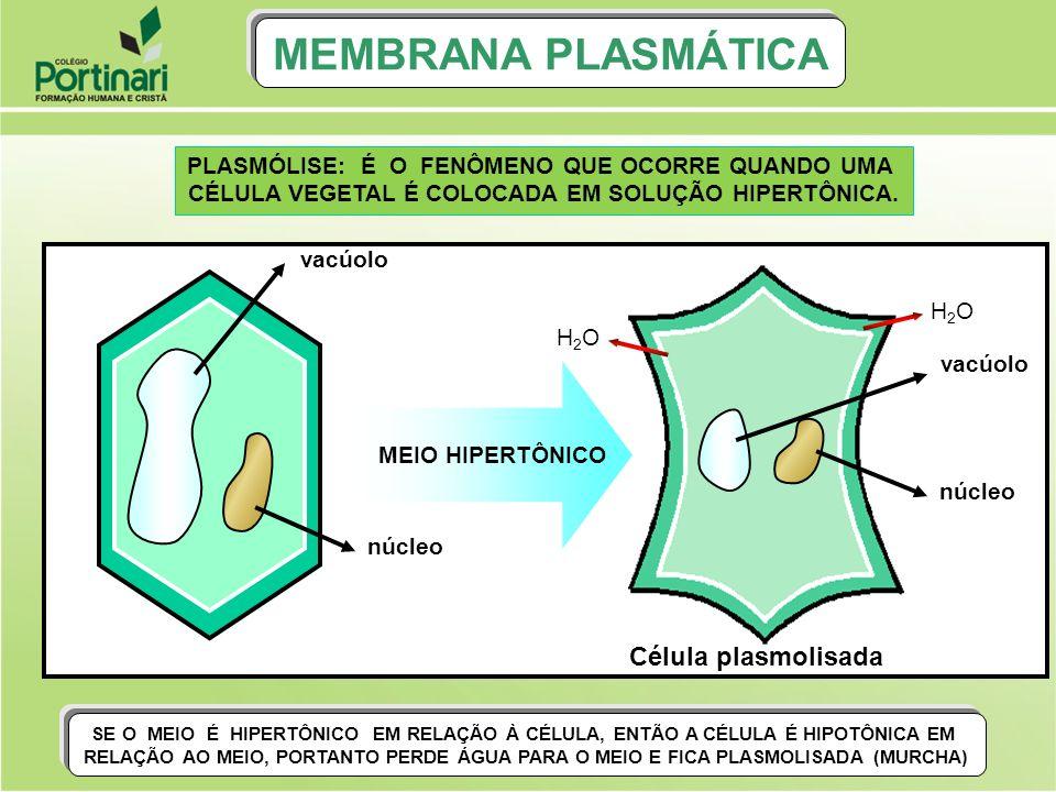 MEMBRANA PLASMÁTICA Célula plasmolisada