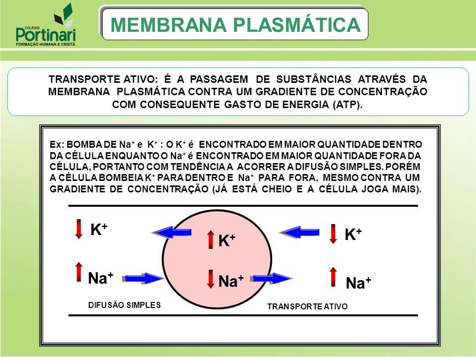 MEMBRANA PLASMÁTICA K+ K+ K+ Na+ Na+ Na+