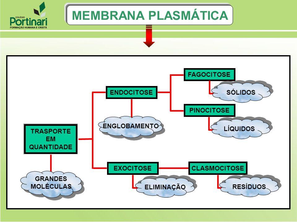 MEMBRANA PLASMÁTICA FAGOCITOSE SÓLIDOS ENDOCITOSE PINOCITOSE