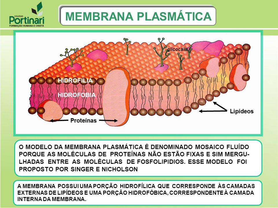MEMBRANA PLASMÁTICA HIDROFILIA HIDROFOBIA