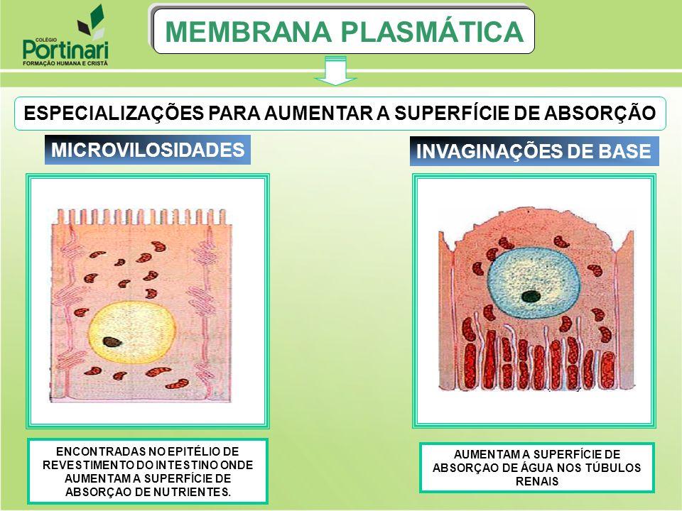 MEMBRANA PLASMÁTICAESPECIALIZAÇÕES PARA AUMENTAR A SUPERFÍCIE DE ABSORÇÃO.