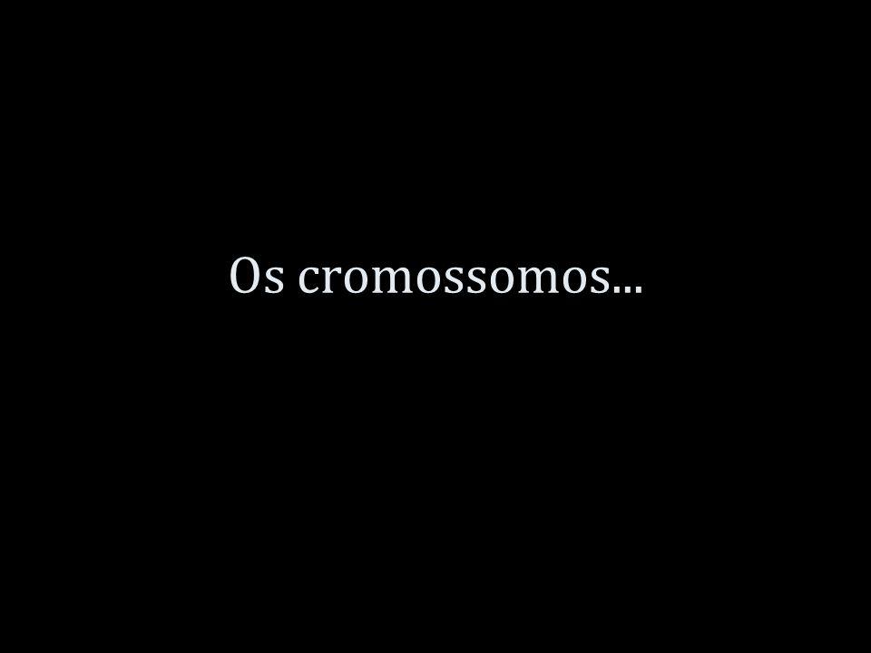 Os cromossomos...