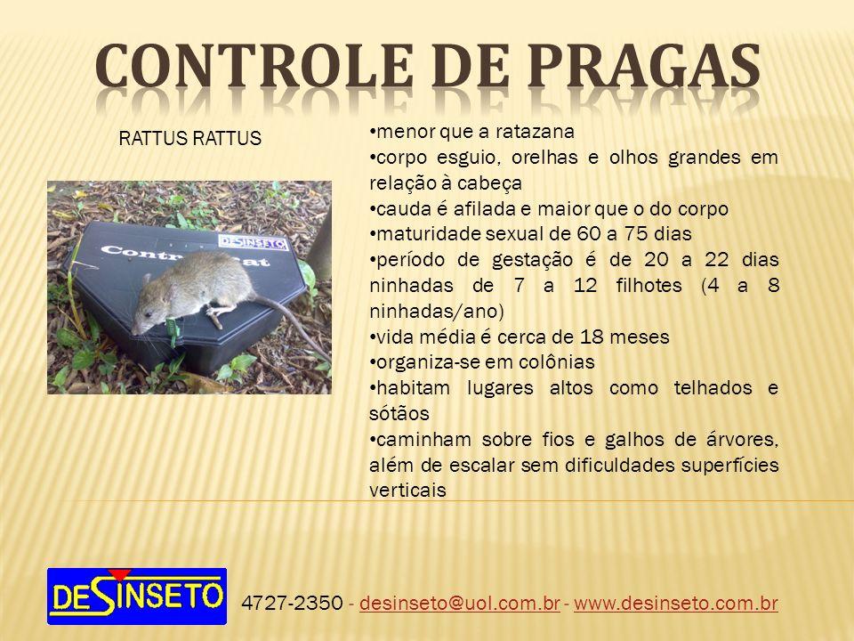 CONTROLE DE PRAGAS menor que a ratazana RATTUS RATTUS