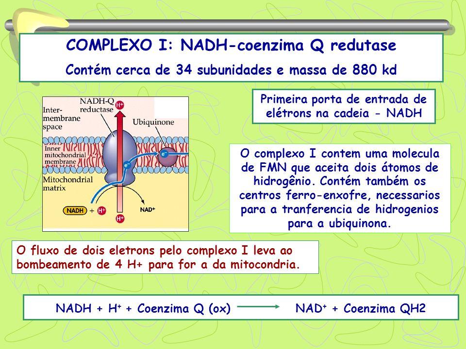 COMPLEXO I: NADH-coenzima Q redutase