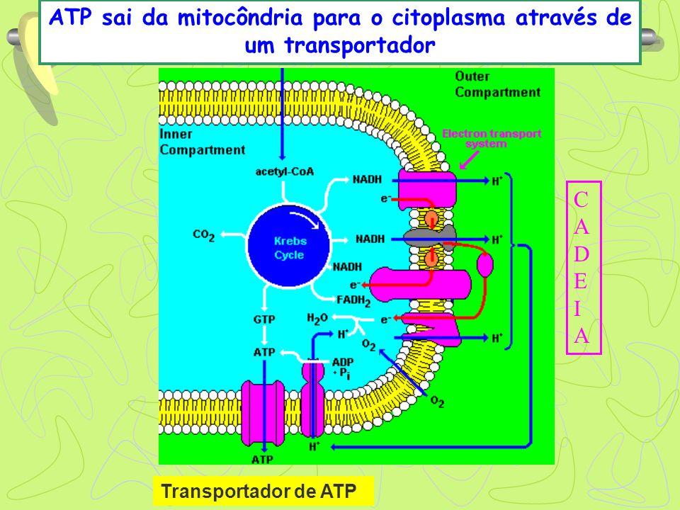 ATP sai da mitocôndria para o citoplasma através de um transportador