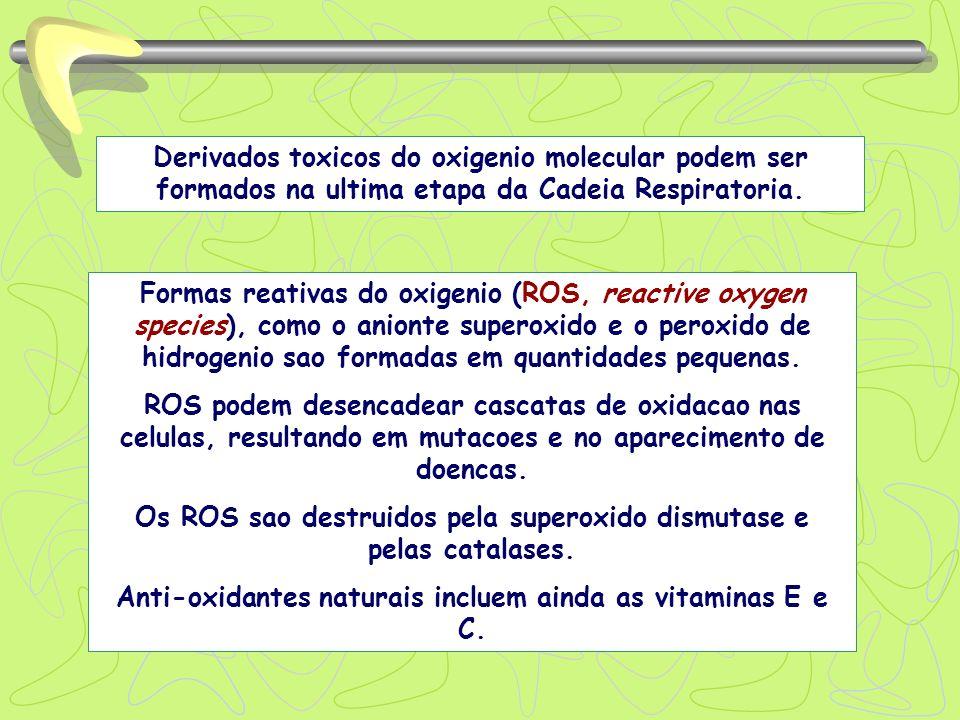 Os ROS sao destruidos pela superoxido dismutase e pelas catalases.