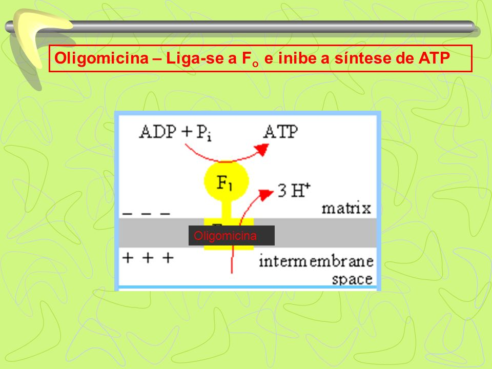 Oligomicina – Liga-se a Fo e inibe a síntese de ATP
