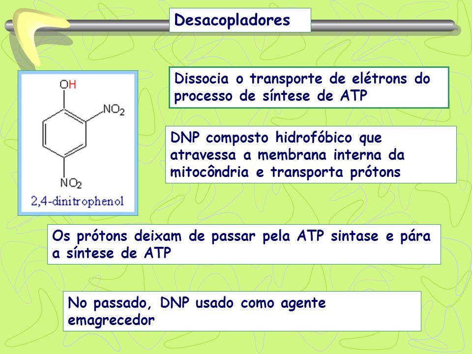 Desacopladores Dissocia o transporte de elétrons do processo de síntese de ATP.