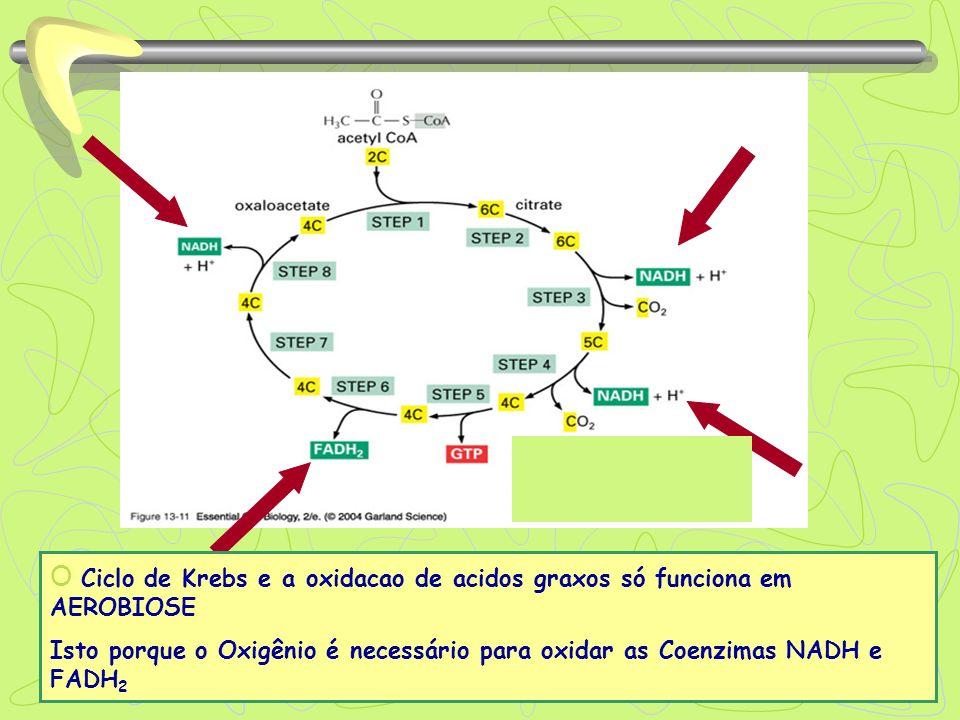 O Ciclo de Krebs e a oxidacao de acidos graxos só funciona em AEROBIOSE