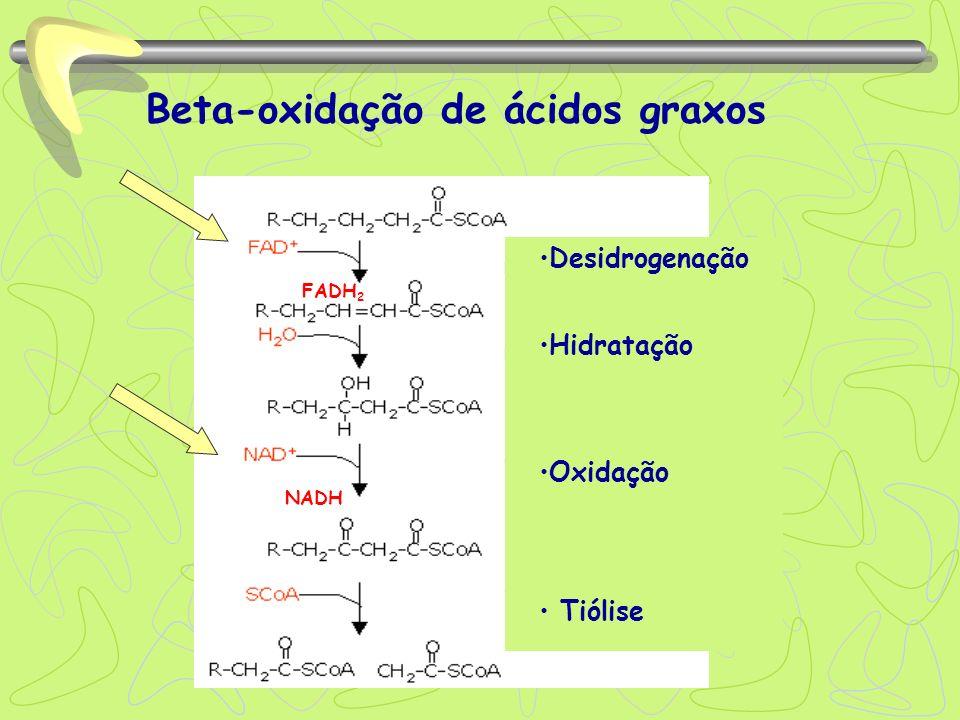 Beta-oxidação de ácidos graxos