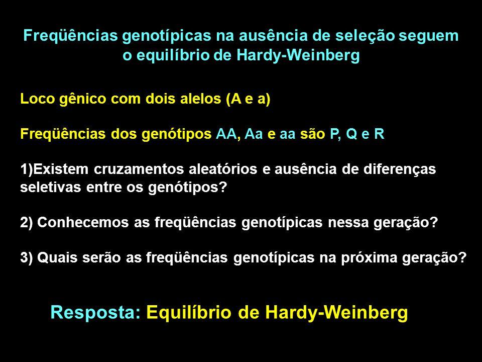 Resposta: Equilíbrio de Hardy-Weinberg