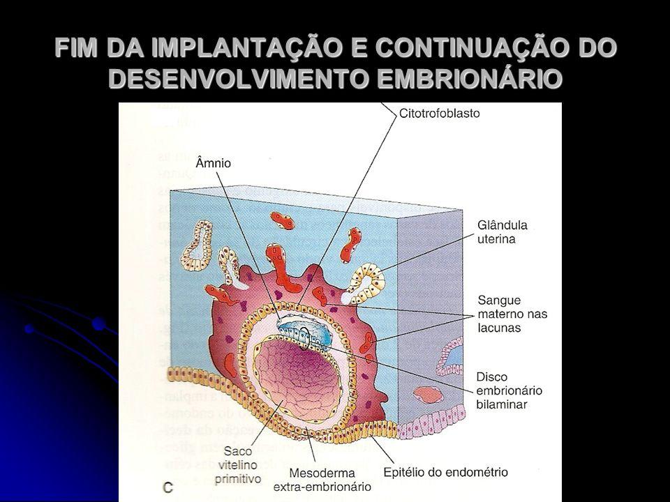 FIM DA IMPLANTAÇÃO E CONTINUAÇÃO DO DESENVOLVIMENTO EMBRIONÁRIO