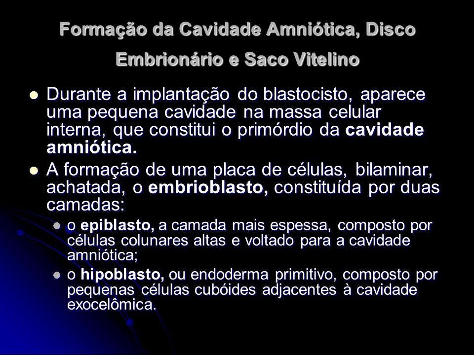Formação da Cavidade Amniótica, Disco Embrionário e Saco Vitelino