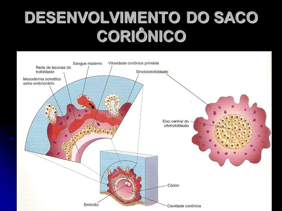 DESENVOLVIMENTO DO SACO CORIÔNICO