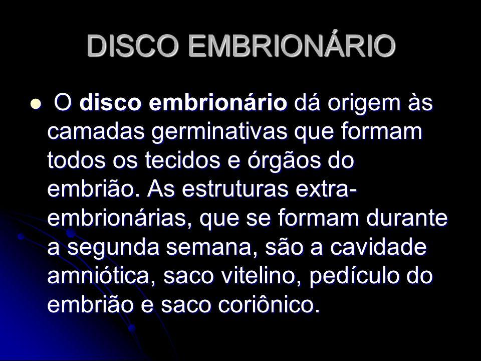 DISCO EMBRIONÁRIO