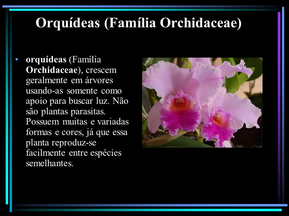 Orquídeas (Família Orchidaceae)