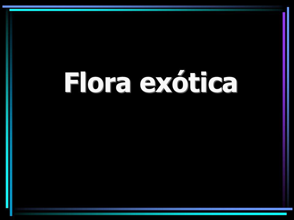 Flora exótica