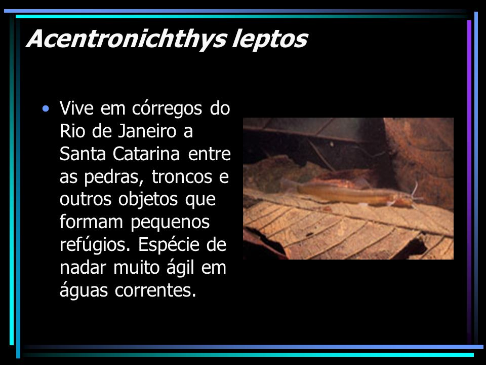 Acentronichthys leptos