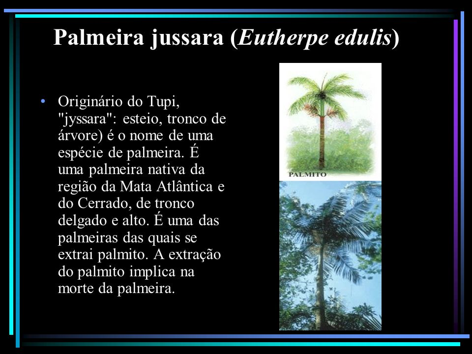 Palmeira jussara (Eutherpe edulis)