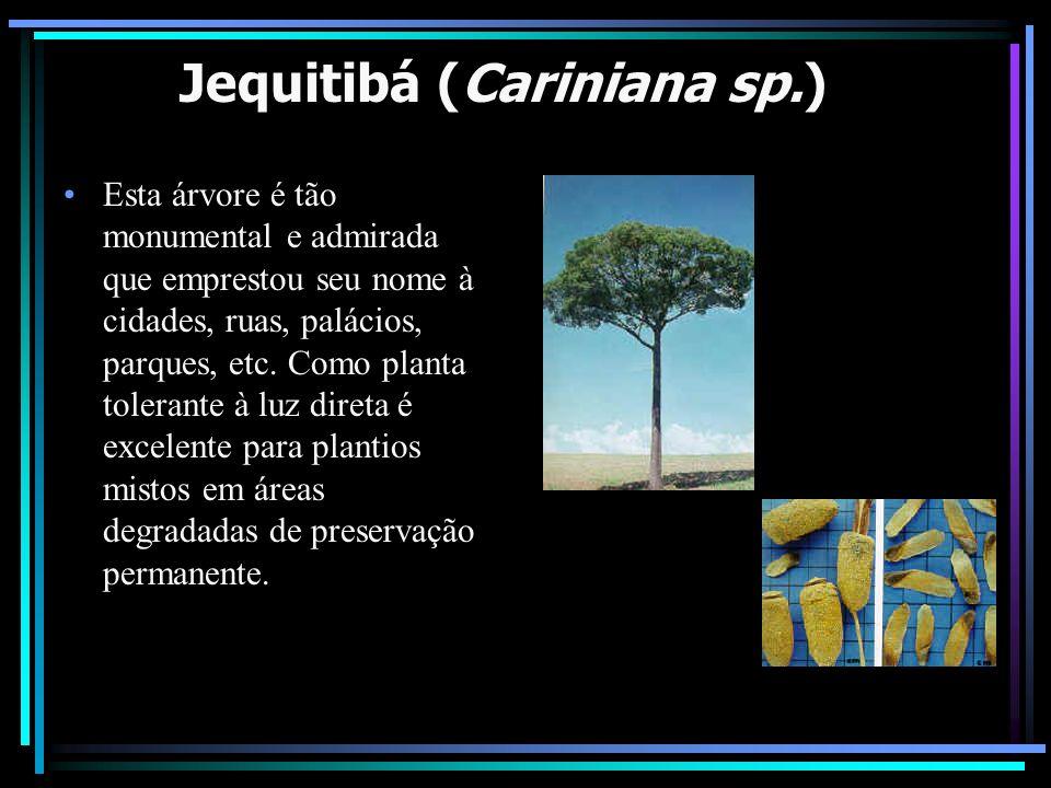 Jequitibá (Cariniana sp.)