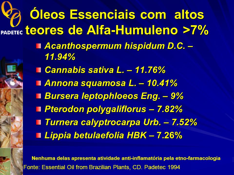 Óleos Essenciais com altos teores de Alfa-Humuleno >7%