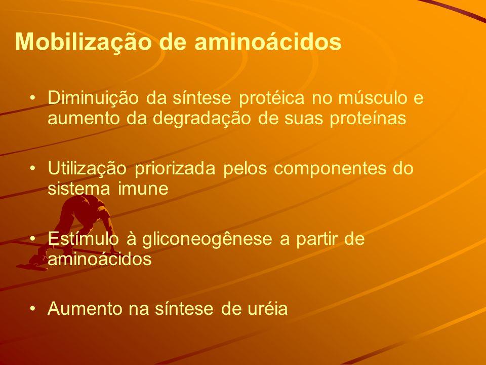 Mobilização de aminoácidos