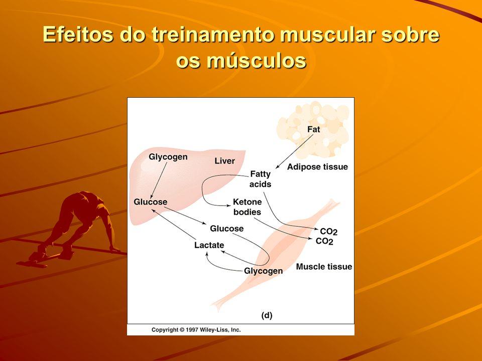Efeitos do treinamento muscular sobre os músculos